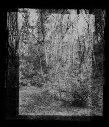 その森で観てきたものの全てあるいは一部 / All or part of what I have seen in that forest