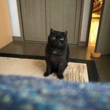 日々のノイ '17-18 / Daily Noi cat '17-18